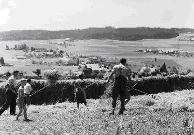 Tiempo de cosecha en una granja cerca de Berna, Suiza. Foto de Three Lions/Getty Images, 1950