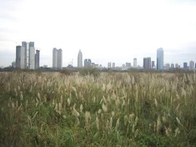 Reserva Ecológica, con Buenos Aires al fondo (foto de Rcidte publicada en wikipedia.org)
