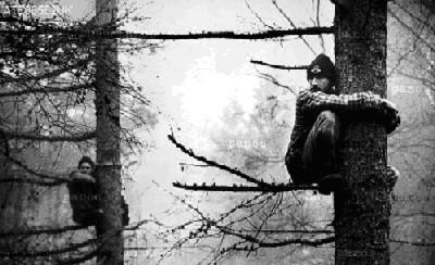 Eco-guerreros subidos a los árboles para evitar la construcción de la variante de Newbury. Foto: A. Testa, 1996