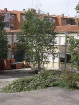 Imagen de la tala ilegal de abril de 2009 en el patio afectado por las obras (imagen procedente de vecinosvalladolid.org).