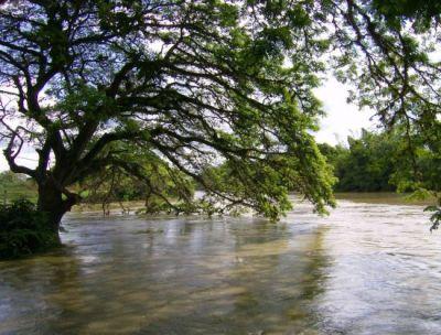 El autor de la fotografía, Óscar Marino Toro H., la ha titulado El árbol que besa el agua (Santiago de Cali, Colombia, 2008, publicada en fotorevista.com.ar)