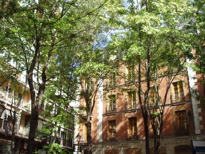 Las acacias de la plaza San Felipe Neri, una tarde de mayo de 2008 (foto: MS)