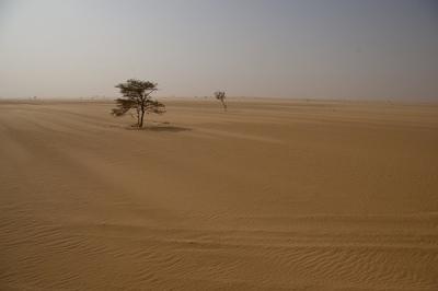 Una imagen del Sahel (procedente de viajeaafrica.com, original de Vonbergen.net