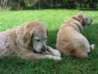 Perros, en una foto procedente de missplange.blog.tdg.ch