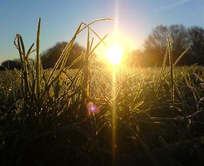 de salmoncove.com: sol emergiendo del verde rocío